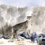 ckst_Юз Арсений, 10 лет Дальневосточный леопард (ирбис) РФ, г. Москва