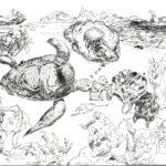 Чибисова Анна, 13 лет Защита черепах Республика Казахстан, Алматинская область, г. Алматы