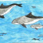 Данис Николаос-Рафаил, 15 лет Азовский дельфин Греческая Республика, периферия Центральная Македония, г. Иериссос