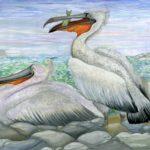 Пирбудагова Диана, 13 лет Кудрявый пеликан РФ, Республика Дагестан, г. Каспийск