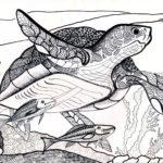 Солдатова Анна, 10 лет Морская черепаха РФ, Владимирская область, г. Ковров