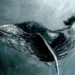 Тамилина Елизавета, 14 лет О чем говорят киты РФ, Тульская область, Арсеньевский район, пгт Славный