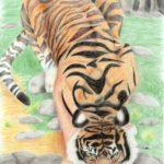 Бахматова Лидия, 14 лет Суматранский тигр Республика Казахстан, Восточно-Казахстанская область, г. Риддер