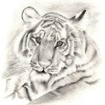 Шабаева Наиля, 17 лет Тигр РФ, Республика Татарстан, г. Елабуга