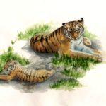 Зернова Анастасия, 17 лет Амурские тигры РФ, Самарская область, г. Тольятти
