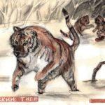 cks_Уткин Михаил, 13 лет Амурский тигр РФ, Ивановская область, г. Кинешма