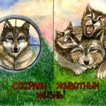 cks_Волкова Анна, 17 лет Исчезающий вид – красный волк РФ, Республика Татарстан, г. Елабуга
